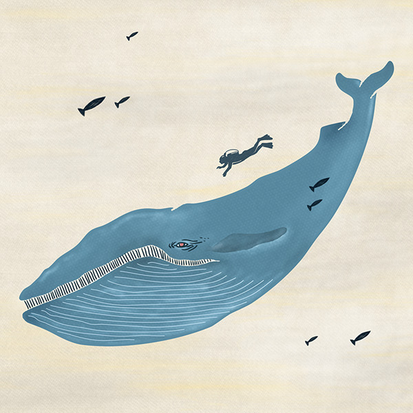 Blue whale with fish and divers.